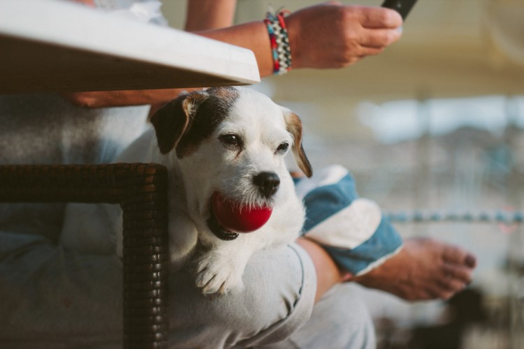 pet owner tips