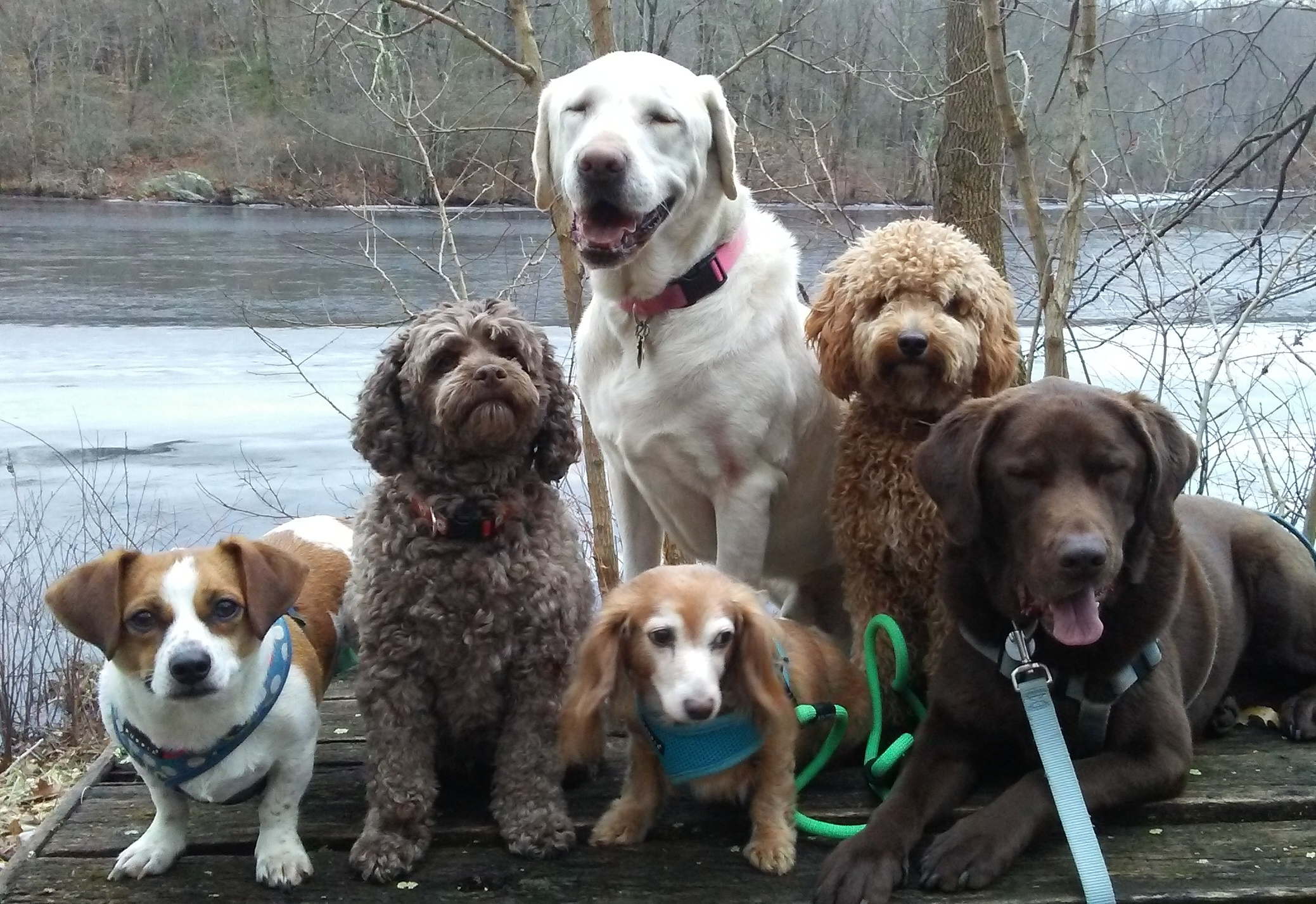 Dog Day Care In Danbury Ct