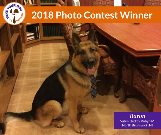 Take Your Dog To Work Day Photo Contest | Pet Sitters