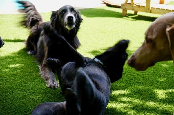 Hudson's Camp Canine