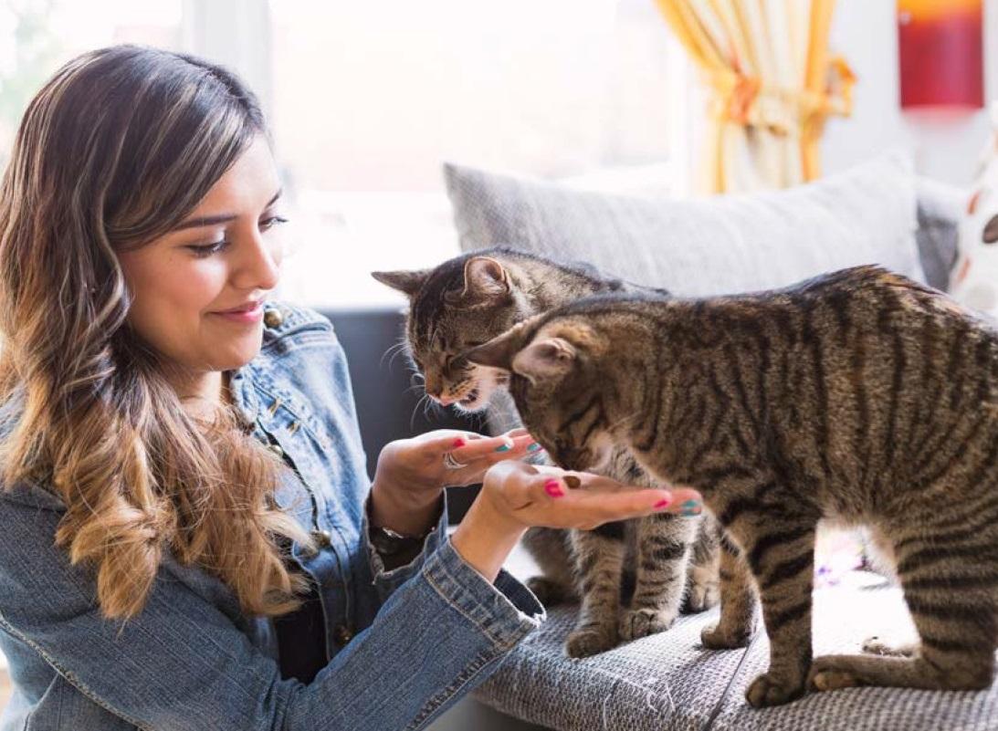 Pet-Sitting Industry Forecast | Pet Sitters International
