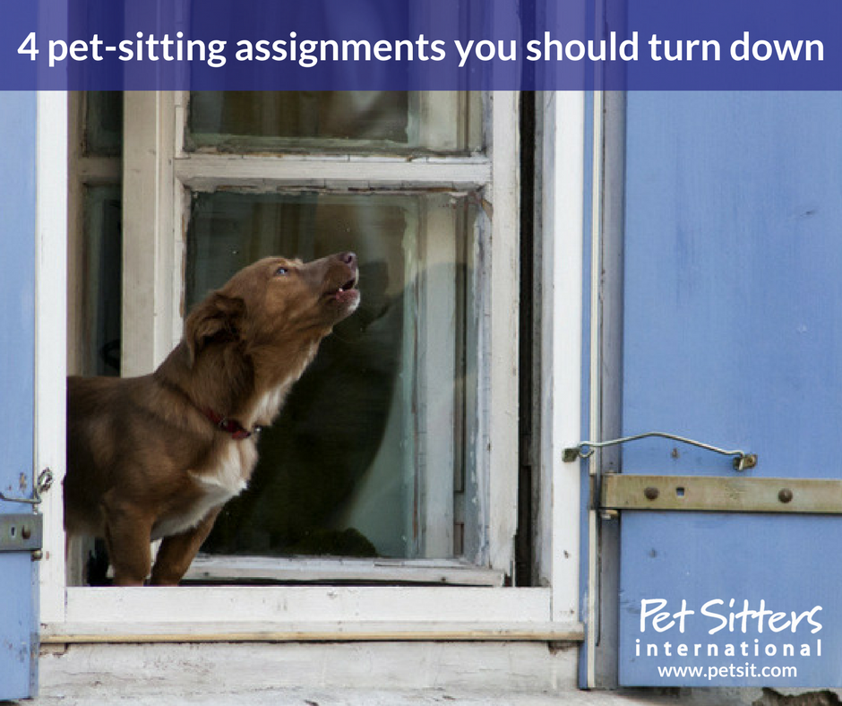 4 Pet Sitting Assignments You Should Turn Down