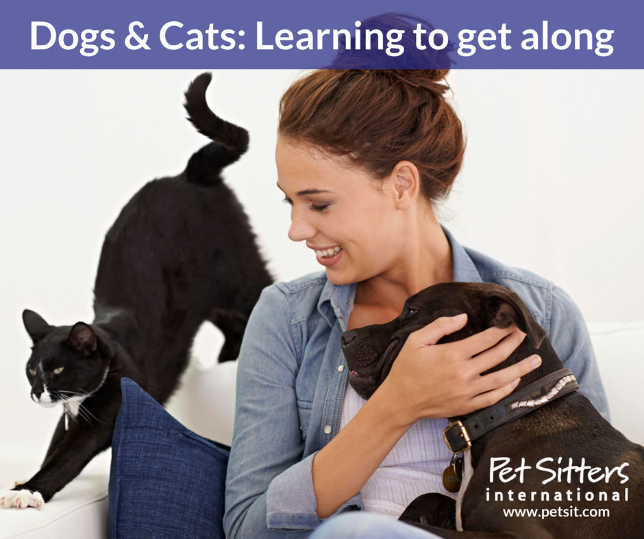How to Make a Cat and Dog Get Along: 14 Steps (with Pictures)