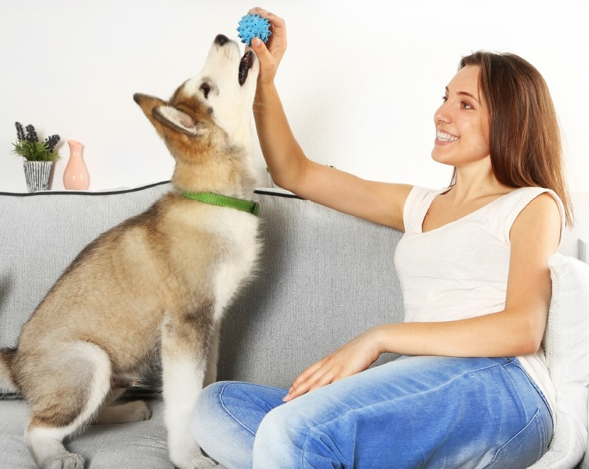Starting a Pet Sitting Business | How to Start a Pet Sitting