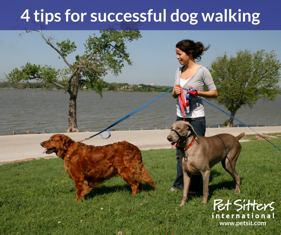 Offering Dog Walking Services Is Just Good Business Brings In A Steady Income Which Can Help Increase Your Pet Care Cash Flow
