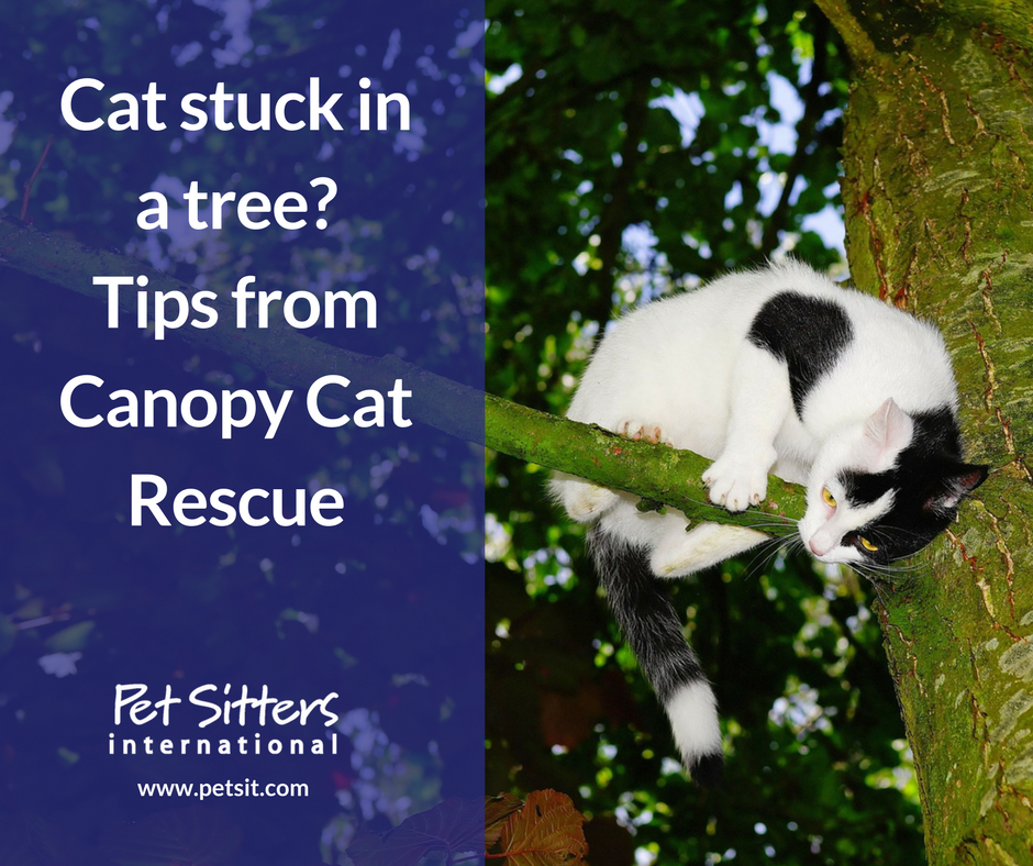 cat stuck in a tree tips from canopy cat rescue pet sitters share