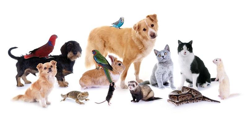 Psi advertising psi media kit pet sitters international for Be a dog sitter
